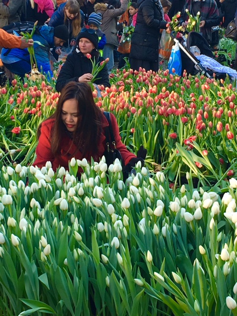 National Tulip Day 2017